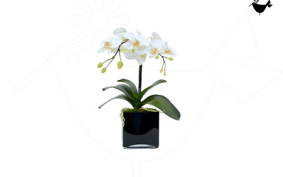 PRODUCTS_FLORITURE_1