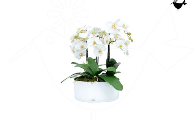 PRODUCTS_FLORITURE_2